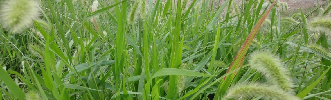 Got Weeds? … We Can Help With Your Needs …