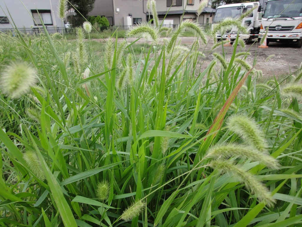 how to help grass grow
